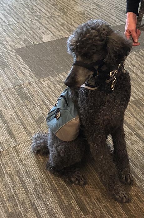Velcro the Dog